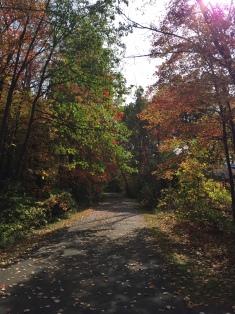 Pure Michigan in October