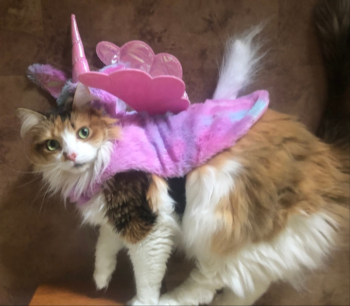 Callie's Unicorn costume